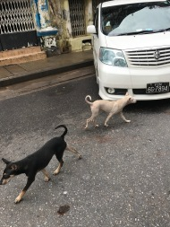 Harmless stray dogs